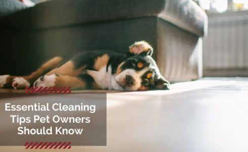 Essential pet cleaning tips