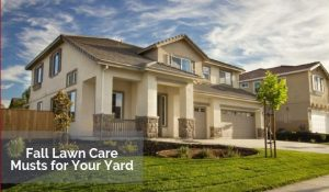 Fall Lawn Care Musts for Your Yard